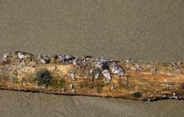 Driftwood Beach (30)