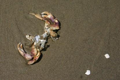 Driftwood Beach (37)