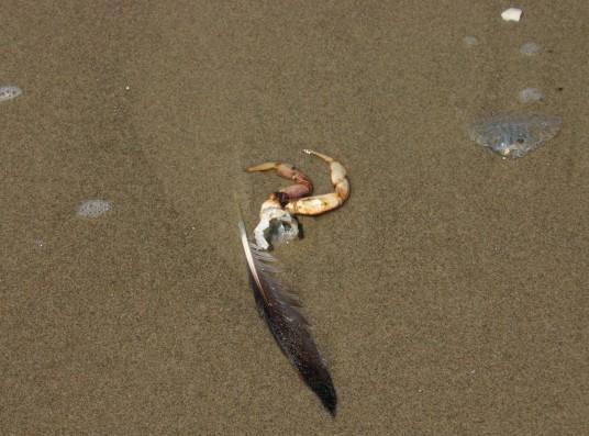 Driftwood Beach (38)