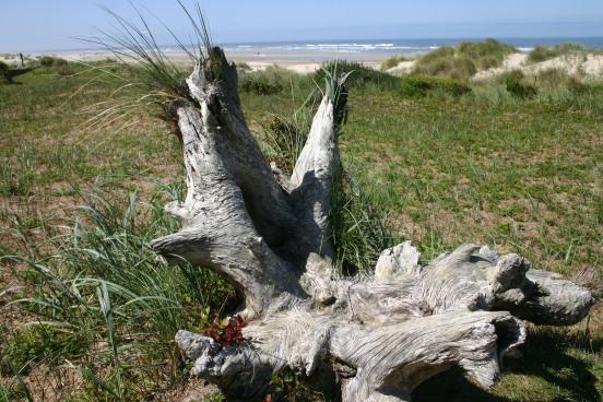 Driftwood Beach (4)