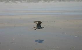 Driftwood Beach (63)