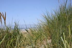 Driftwood Beach (7)