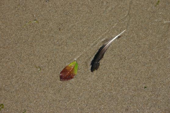 Driftwood Beach (72)