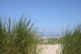 Driftwood Beach (8)