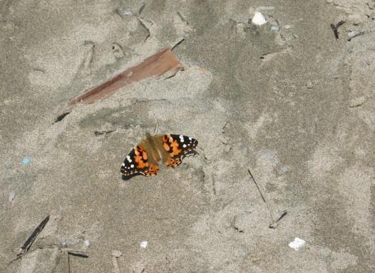 Driftwood Beach (84b)