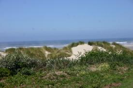 Driftwood Beach (90)