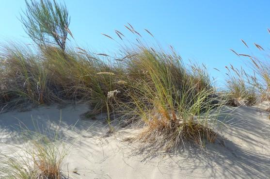 Driftwood Beach (91)