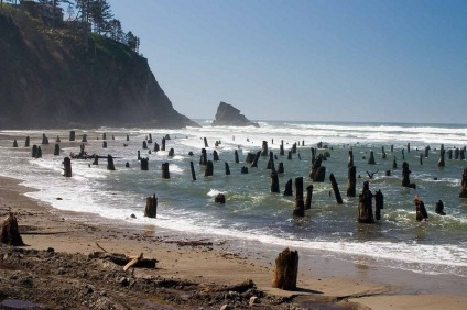 Neskowin - Ghost Forest1