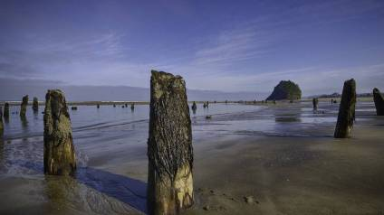 Neskowin - Ghost Forest3