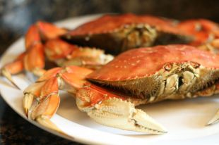 steamed crab - dungeness