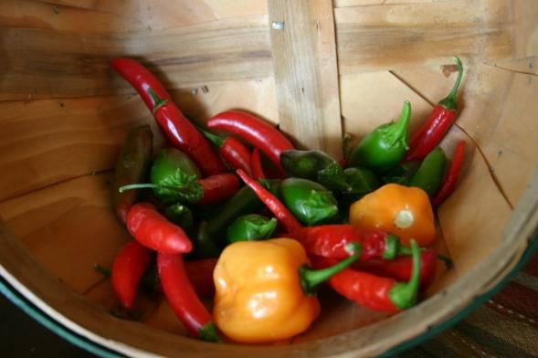 August Harvest (3)