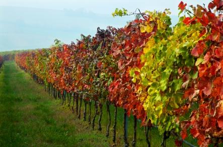 fall colors1
