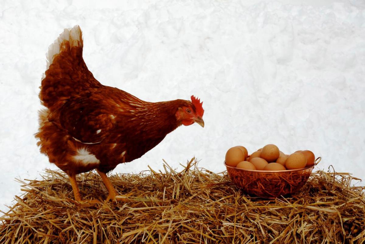 Wake up – It's National EggDay!