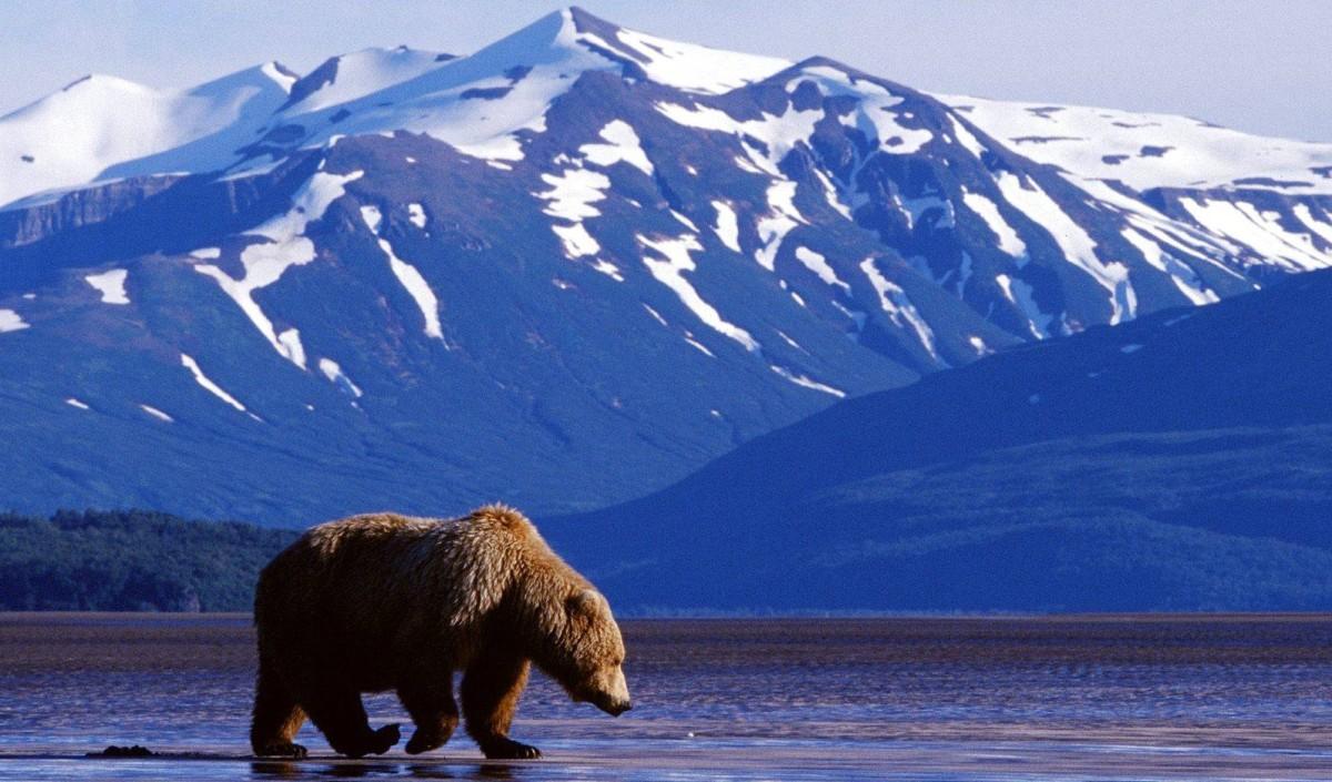 Alaska, The Last AmericanFrontier