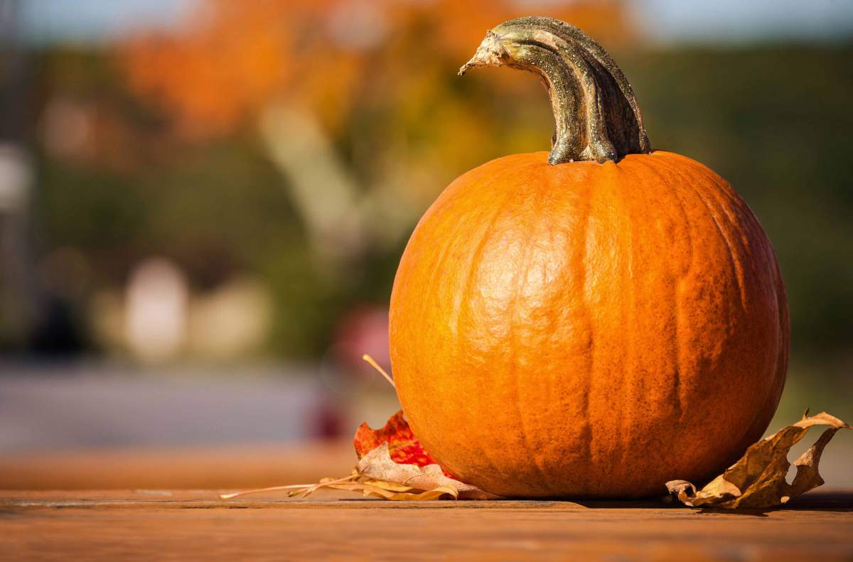Welcome October and All ThingsFall